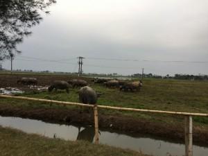 ベトナム田舎の田畑